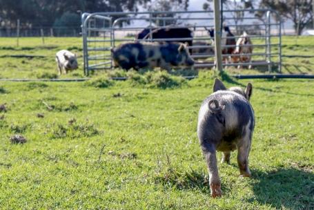 Farm23_1
