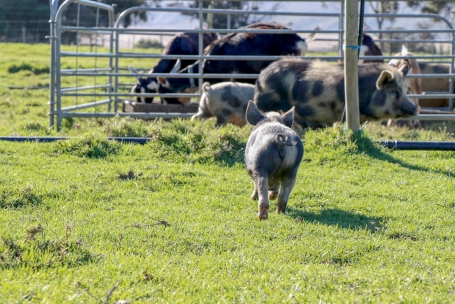 Farm24_1